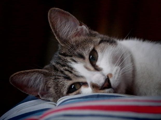 cat-1402170_1280